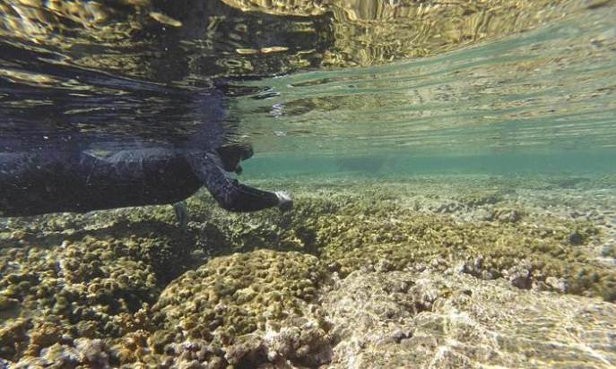 Coral bleaching, in Kaneohe Bay near Kaneohe, Hawaii. Photograph: Dan Dennison/AP (source http://www.theguardian.com/us-news/2015/sep/13/hawaii-coral-bleaching-scientists-predict-worst-ever).